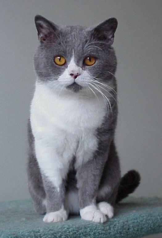 Breed Profile